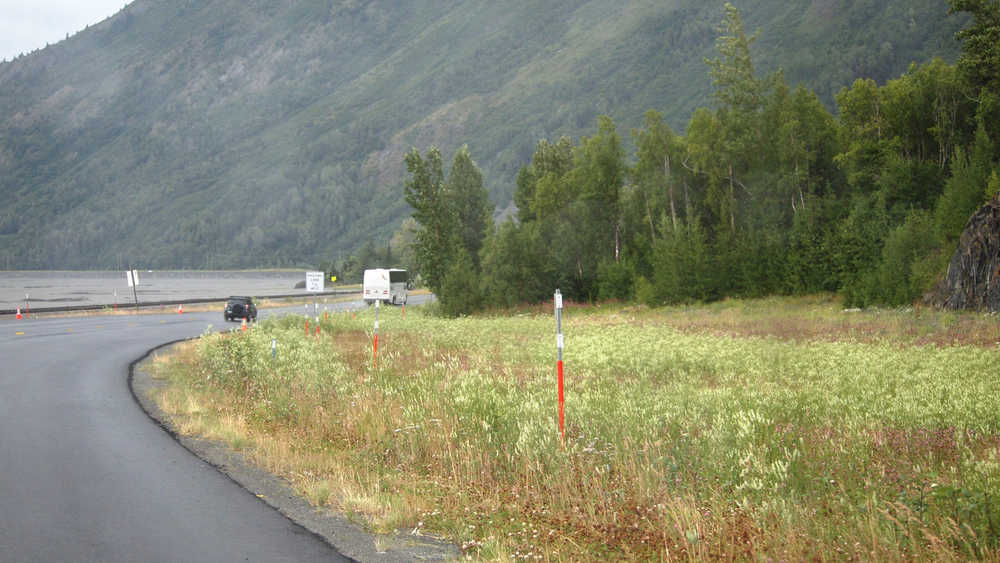 The invasive white sweetclover spreads down the Seward Highway toward the 10-mile wide isthmus at Portage that separates the Kenai Peninsula from the Anchorage area. Photo by John Morton)
