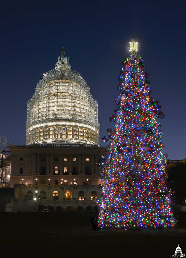 Photo courtesy/Architect of the CapitolThis year's Capitol Christmas Tree in Washington D.C. is a Lutz spruce from Primrose on the Kenai Peninsula.