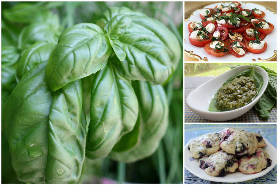 Basil, the 'King of Herbs,' bursts with summer flavor