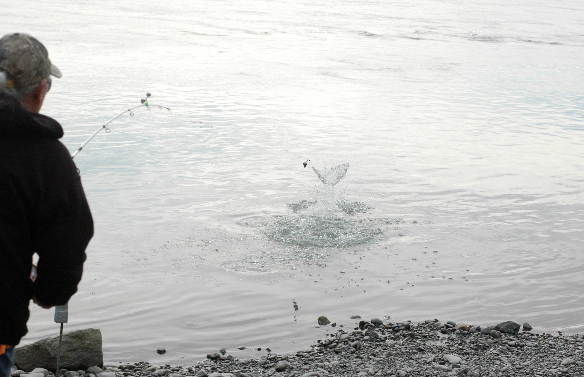An angler wrestles with a silver salmon on her line in the Kenai River at Cunningham Park on Wednesday, Aug. 30, 2018 in Kenai, Alaska. (Photo by Elizabeth Earl/Peninsula Clarion)