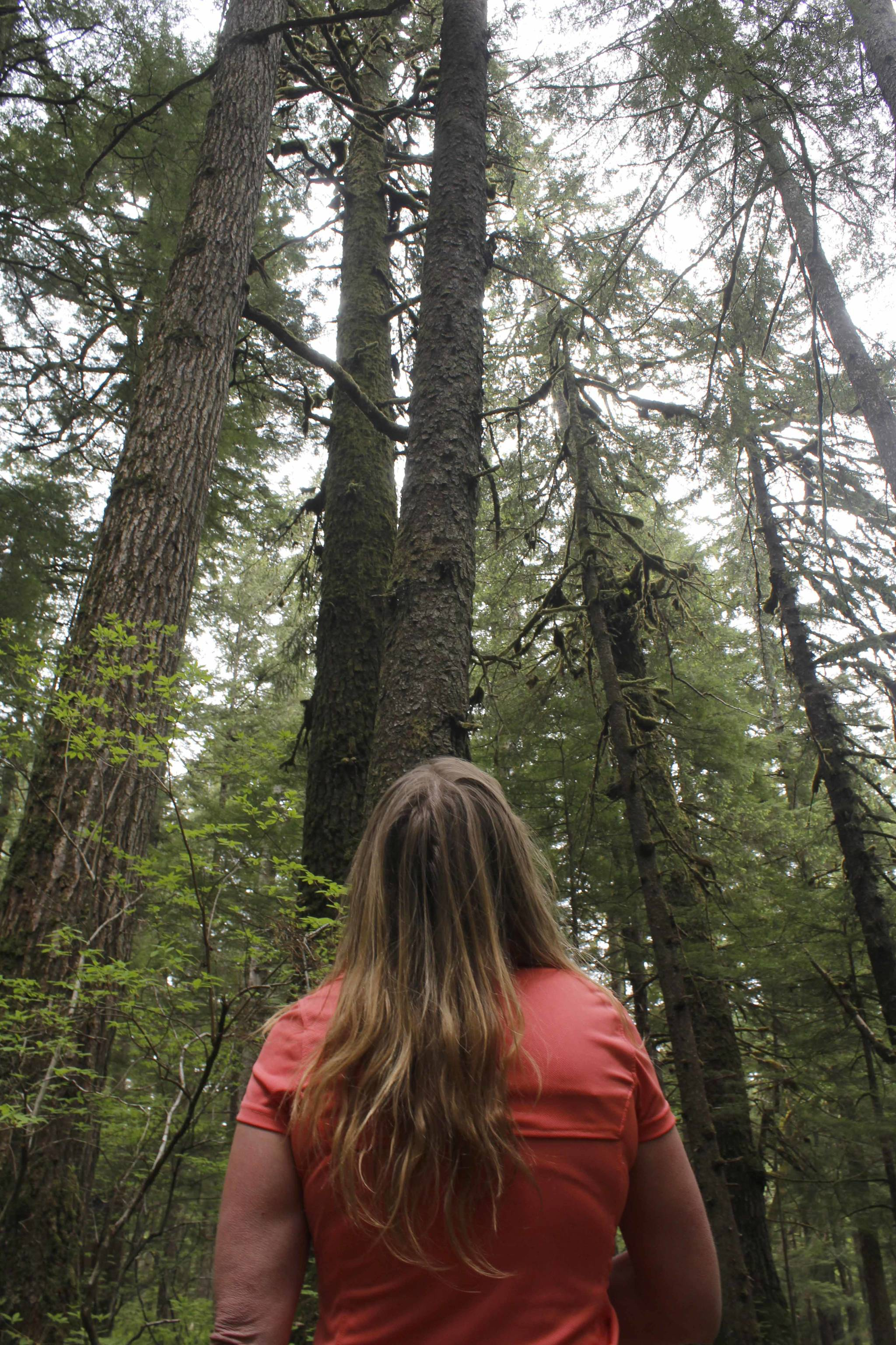 Survivalist Kellie Nightlinger looks up at trees while walking on Juneau's Rainforest Trail. Nightlinger has been voted the top female survival expert in the world, and has chosen Alaska as her home for the past five years. (Alex McCarthy | Juneau Empire)