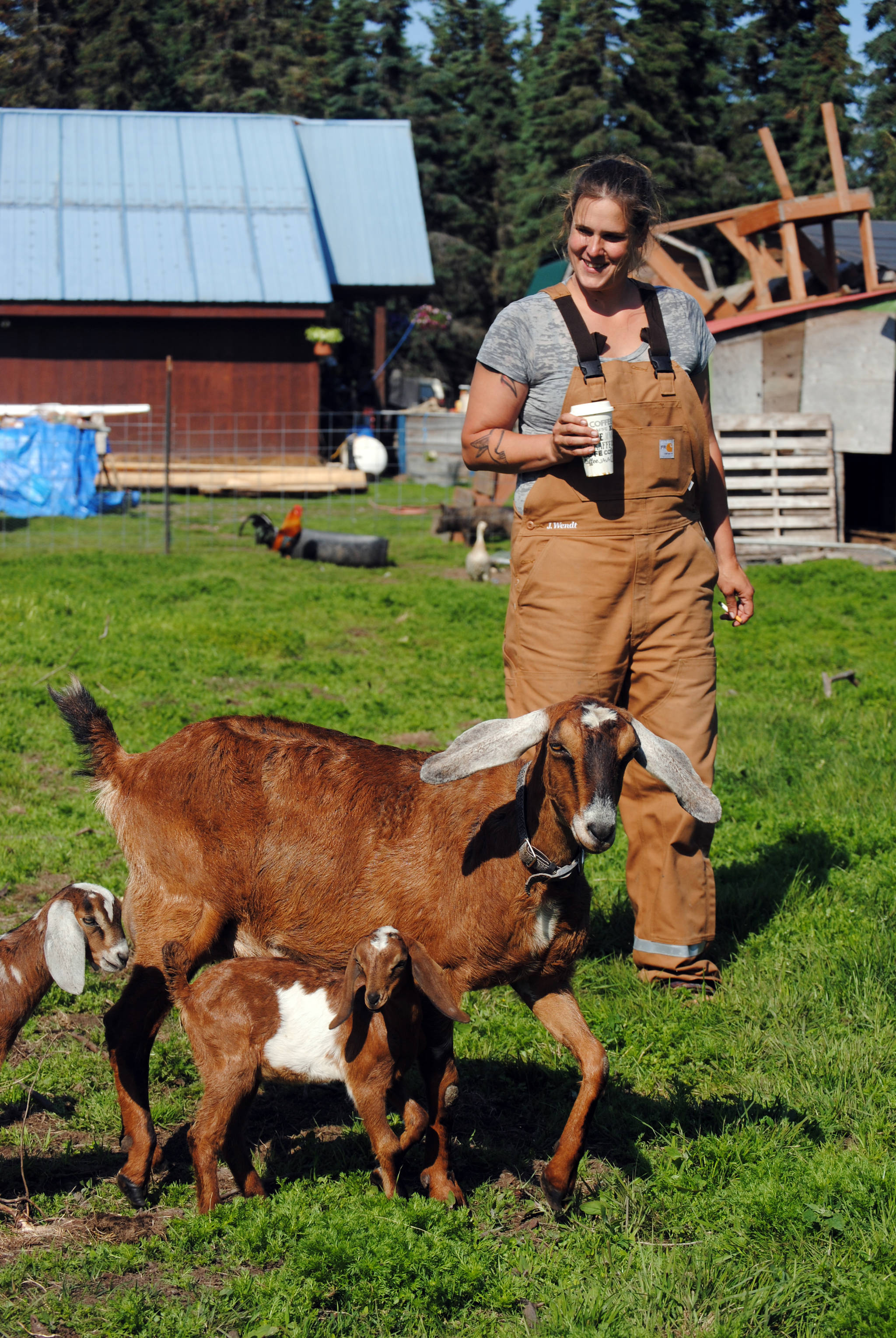Getting your goat: Karluk Acres farm finds niche