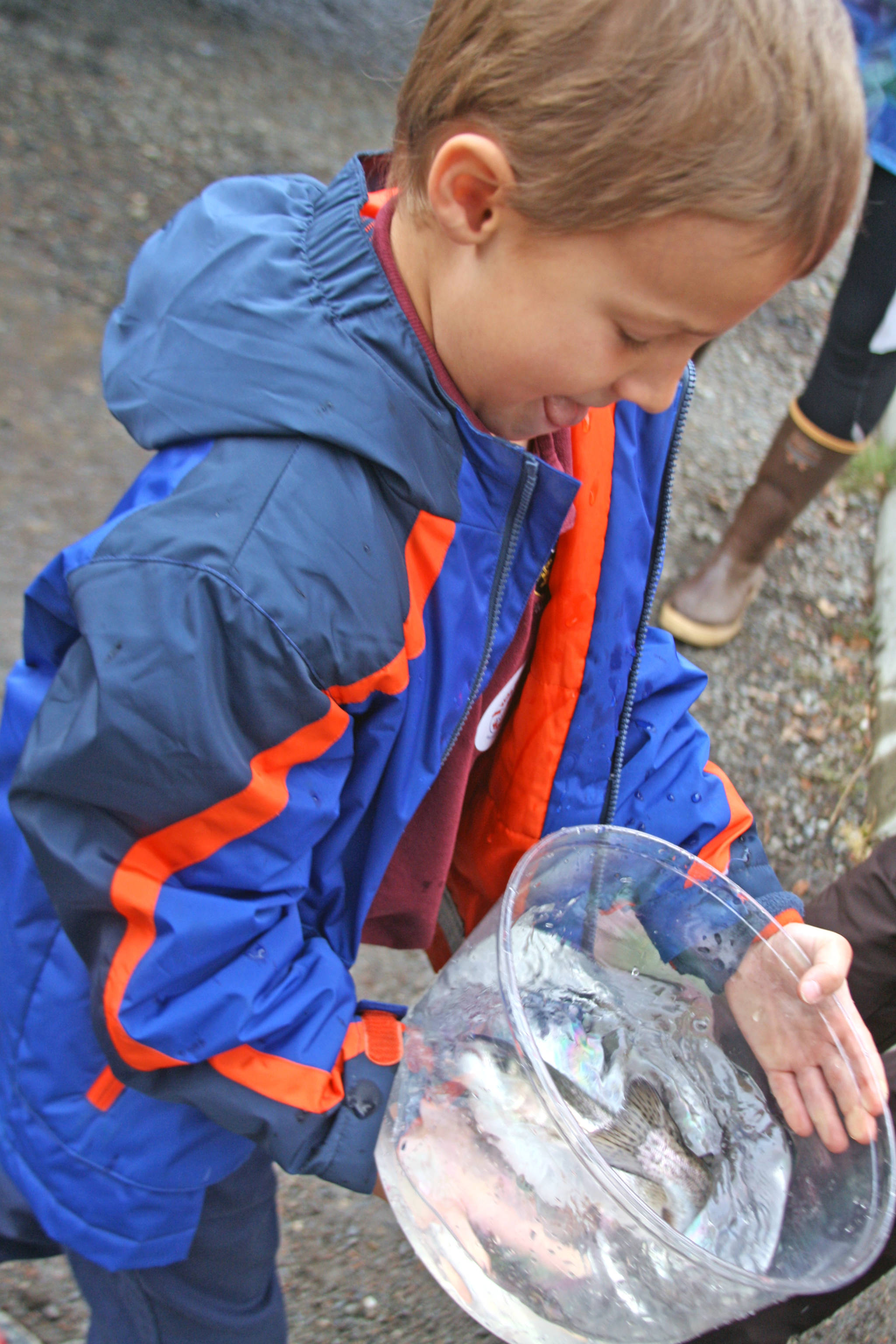 A student carries a rainbow trout at Johnson Lake State Recreation Site in Kasilof. Approximately 950 borough students released 5,000 fish into Johnson Lake as part of an Alaska Department of Fish and Game restocking effort. (Photo by Erin Thompson/Peninsula Clarion)