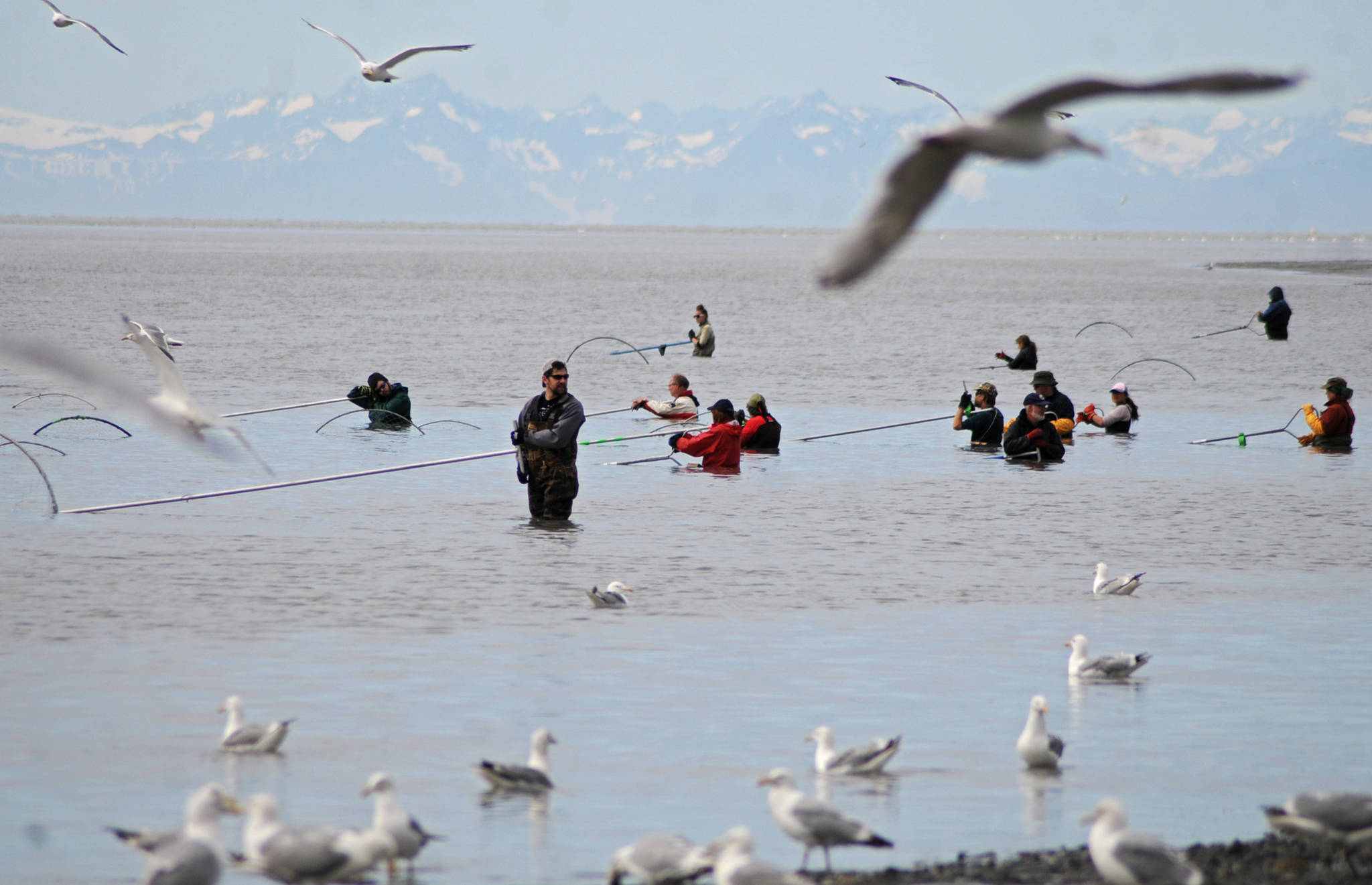 Dipnetters hold their nets offshore from the north Kenai Beach on Tuesday, July 11, 2017 in Kenai, Alaska. (Photo by Elizabeth Earl/Peninsula Clarion, file)