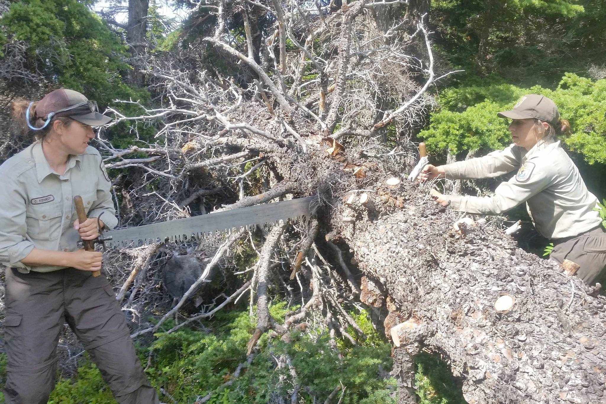 Christa Kennedy and Izzie Giacomangeli double-buck a downed tree in July 2018 on Surprise Creek Trail within the Andrew Simons Wilderness Unit. (Photo provided by Kenai National Wildlife Refuge)