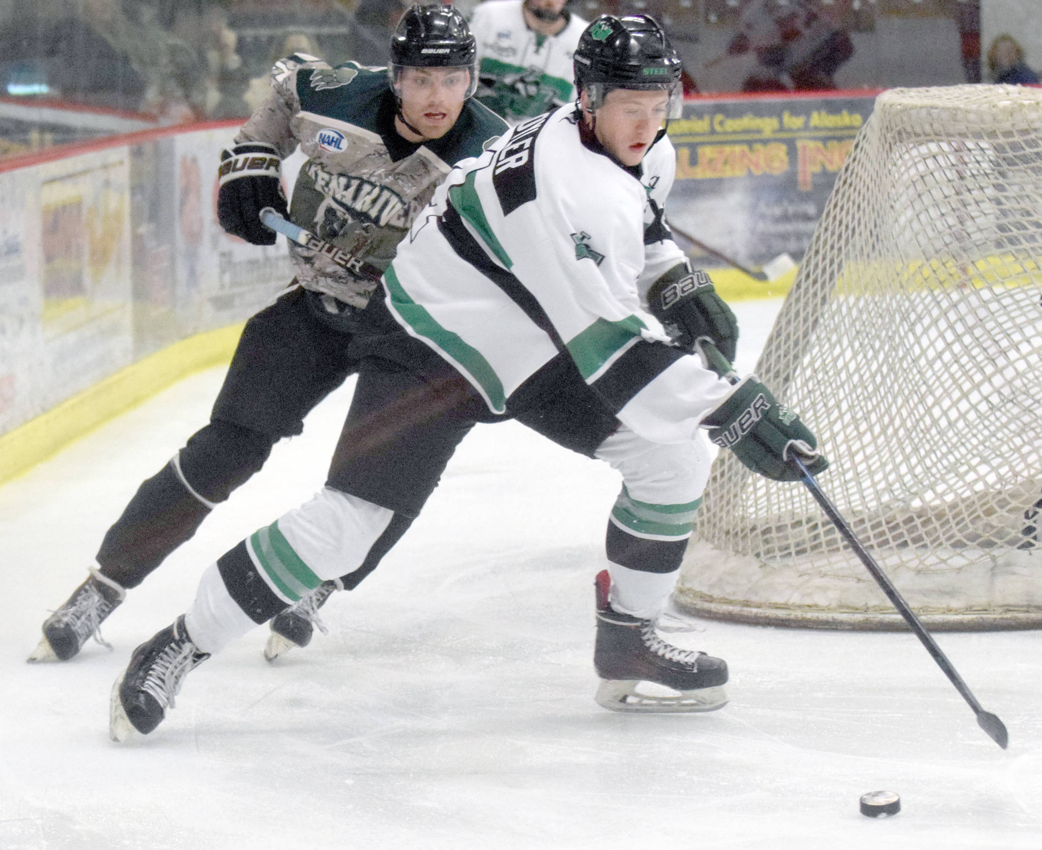 Chippewa (Wisconsin) Steel defenseman Spencer Oyler protects the puck from Brown Bears forward Brendan White on Friday, Jan. 11, 2019, at the Soldotna Regional Sports Complex. (Photo by Jeff Helminiak/Peninsula Clarion)