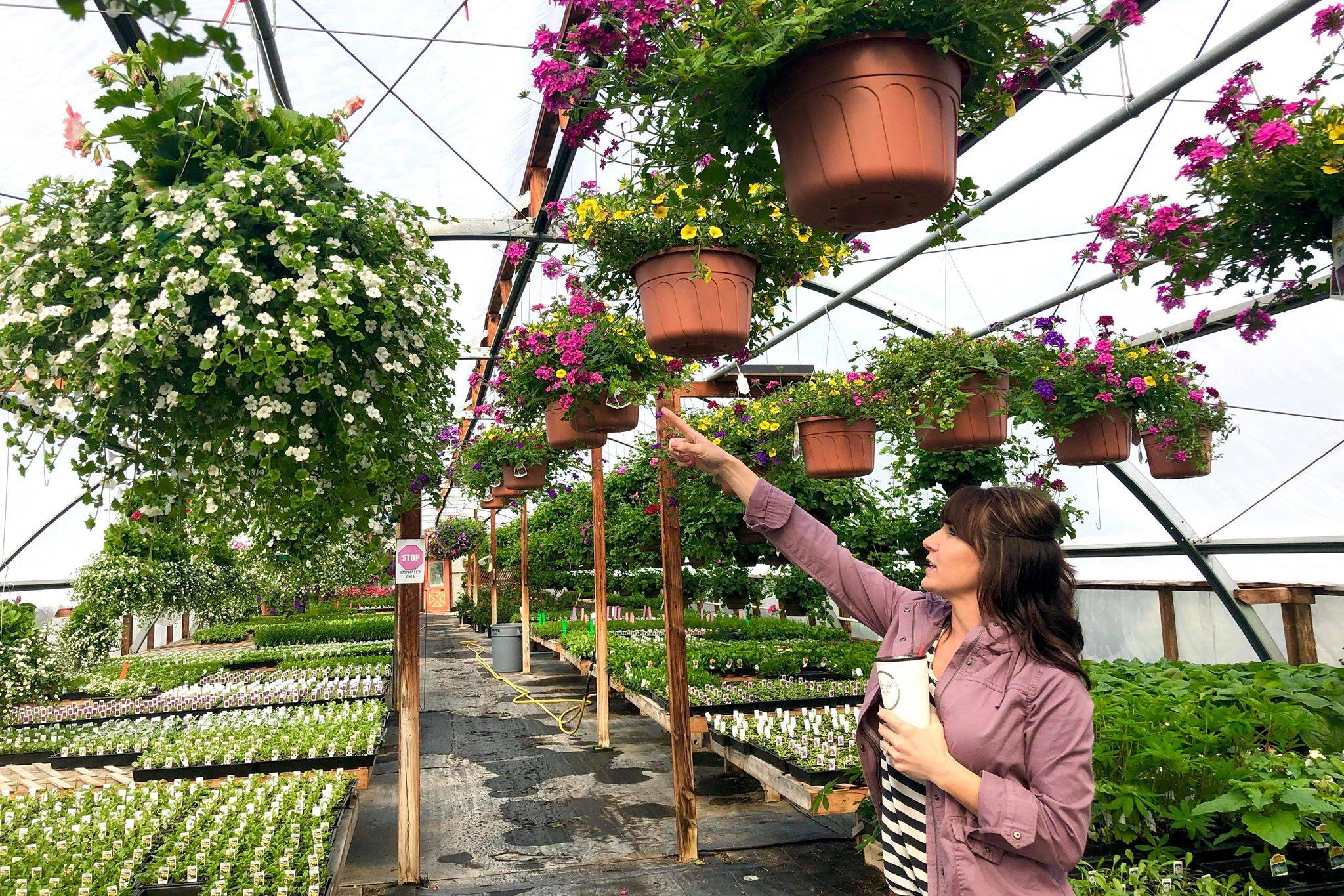 Jessica Henry points to one of the many flower baskets made at Trinity Greenhouse, which are some of the business's bestsellers, on Monday, June 3, 2019, near Kenai, Alaska. (Photo by Victoria Petersen/Peninsula Clarion)