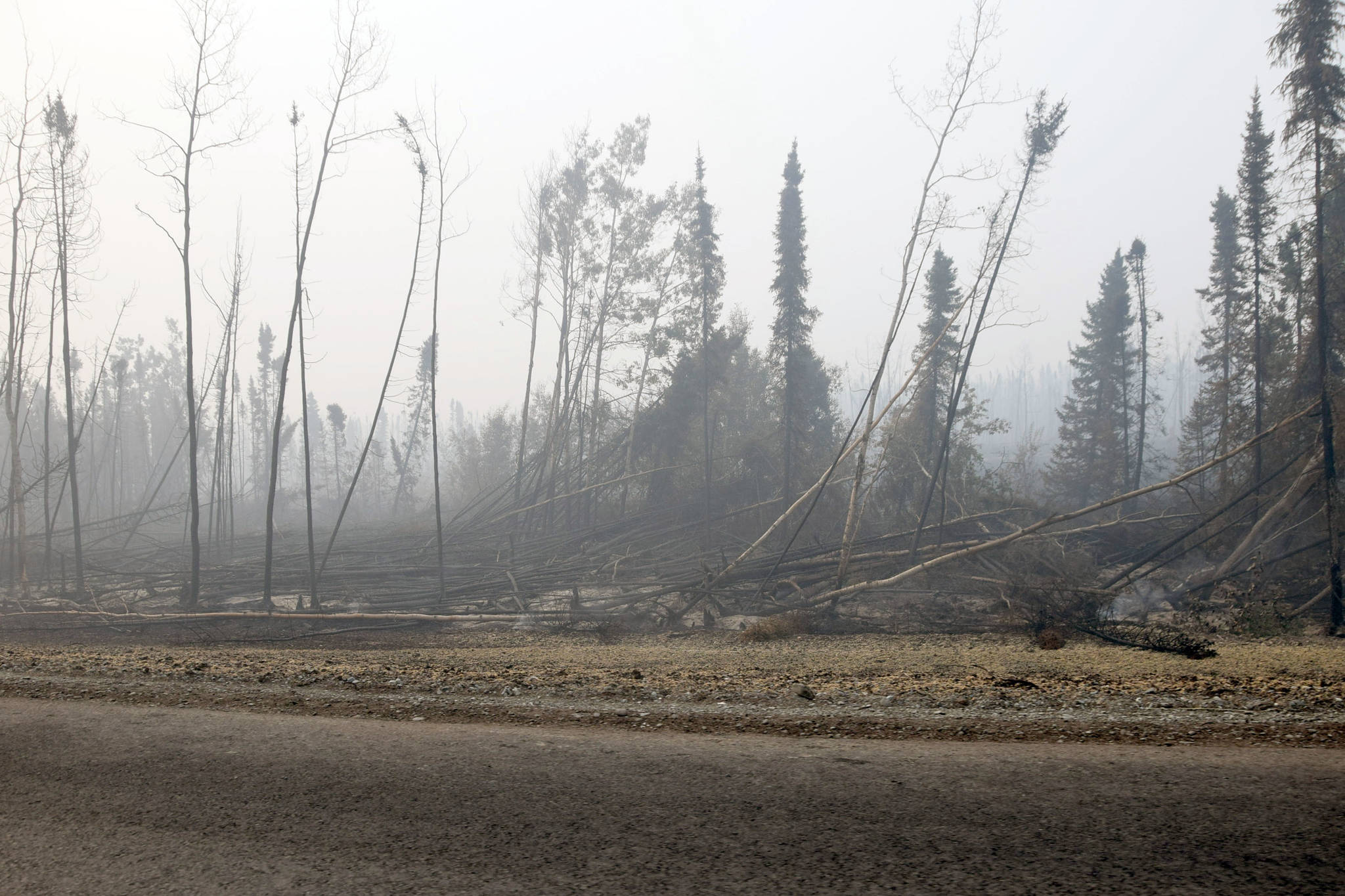 Trees burned by the Swan Lake Fire and knocked down by gusts of wind can be seen here along the Sterling Highway on Aug. 30, 2019. (Photo by Brian Mazurek/Peninsula Clarion)