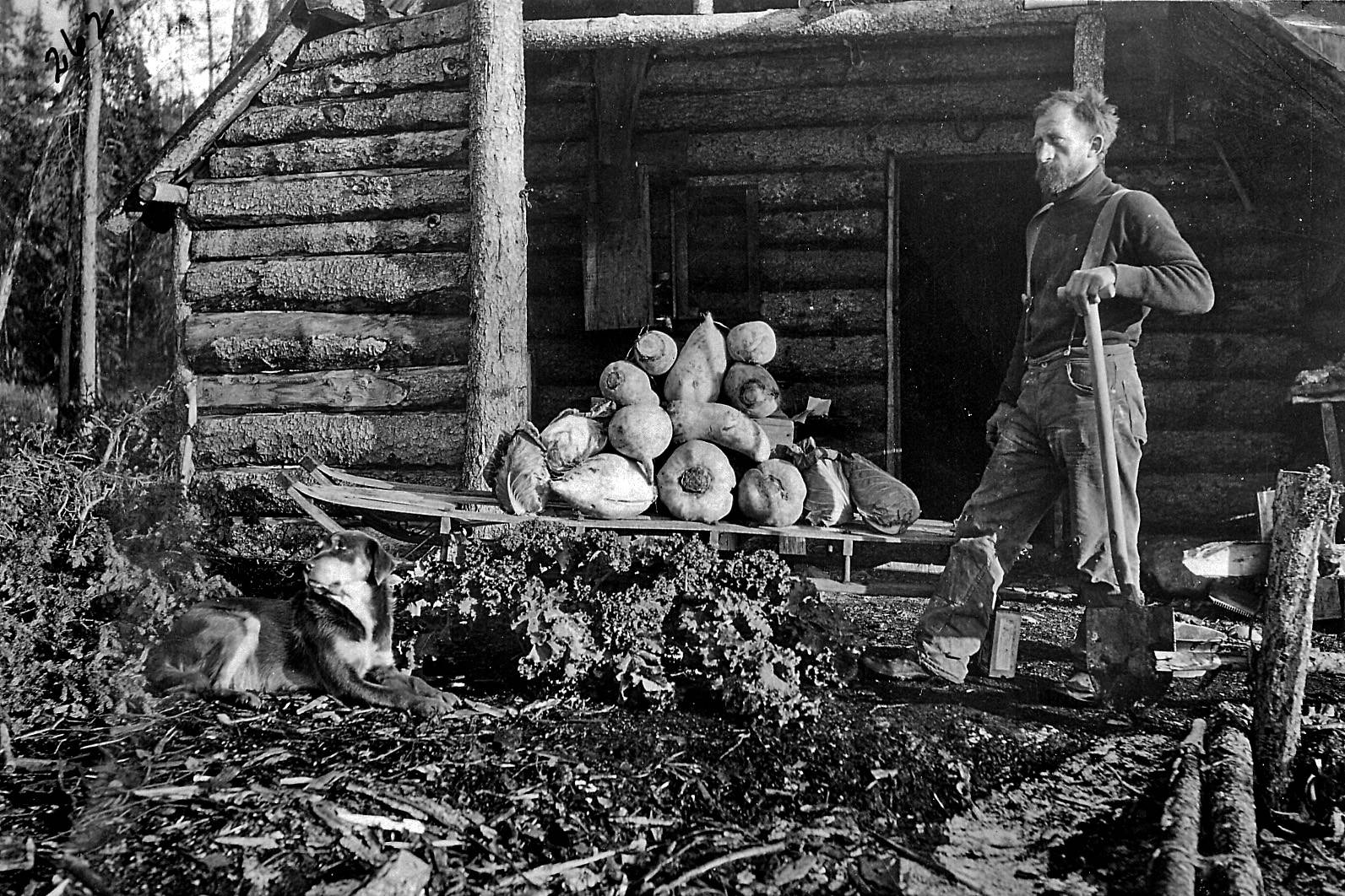 Herman Stelter at his home on Kenai R, circa 1910s--Herman Stelter, one of the few members of the Kings County Mining Company to remain in or return to Alaska, poses here with a big crop of vegetables by his home near the Kenai River canyon. (U.S. Forest Service photo)