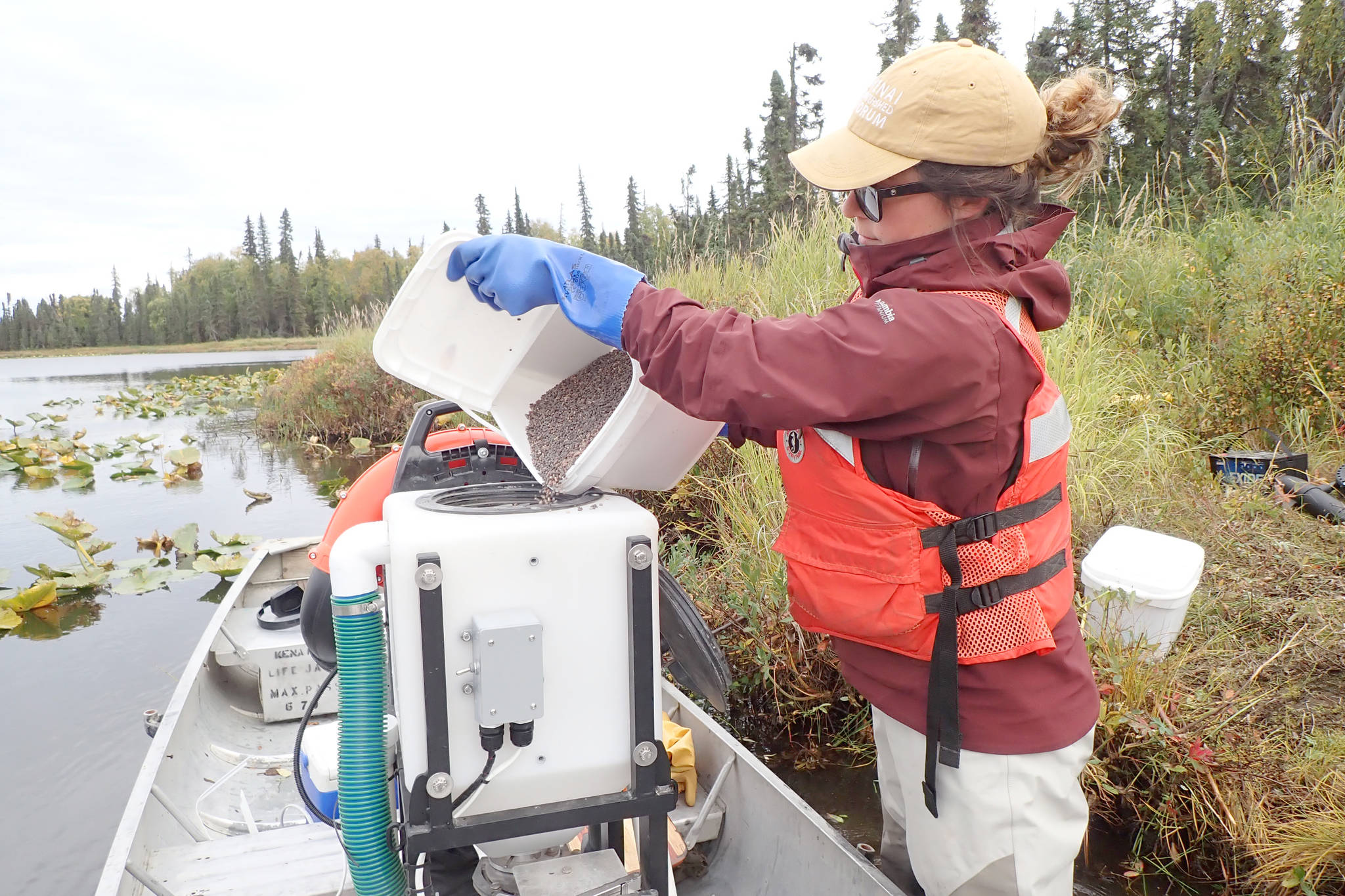 Maura Schumacher, invasive species specialist with the Kenai Watershed Forum, loads the hopper with fluridone pellets that are applied via a gasoline-fired blower to Hilda-Seppu Lake. (Photo by Matt Bowser/Kenai National Wildlife Refuge)