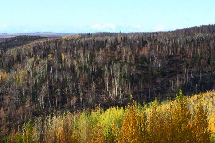 Areas burned by the Swan Lake Fire can be seen from Vista Trail at Upper Skilak Campground on Sunday. (Photo by Jeff Helminiak/Peninsula Clarion)
