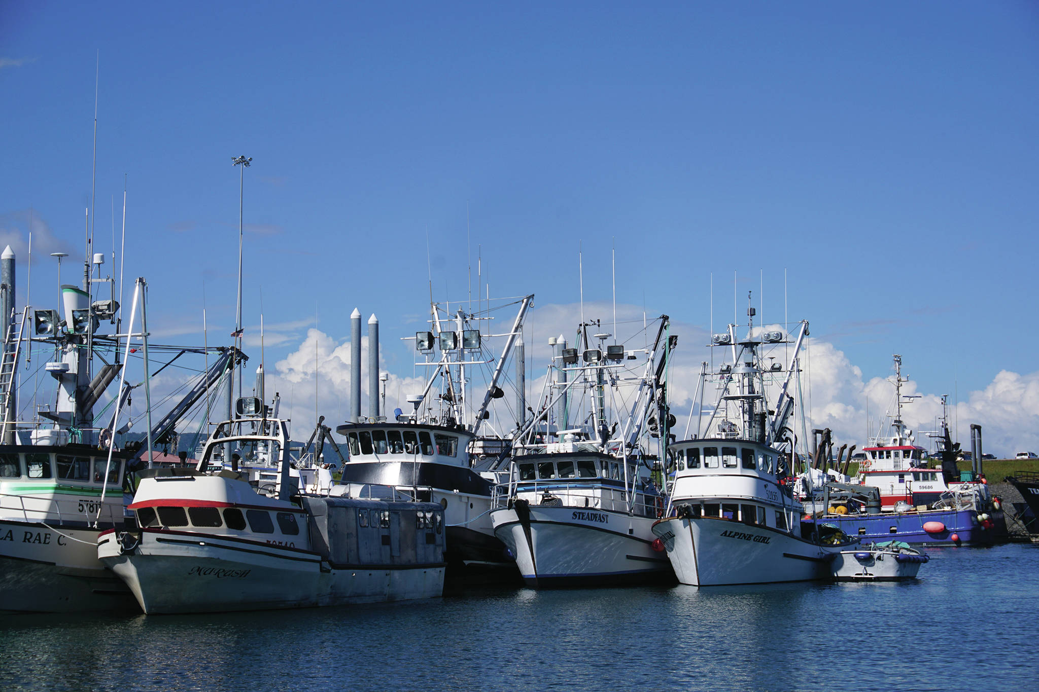 Commercial fishing boats are rafted together in May 2016 in the harbor in Homer, Alaska. (Photo by Michael Armstrong/Homer News)