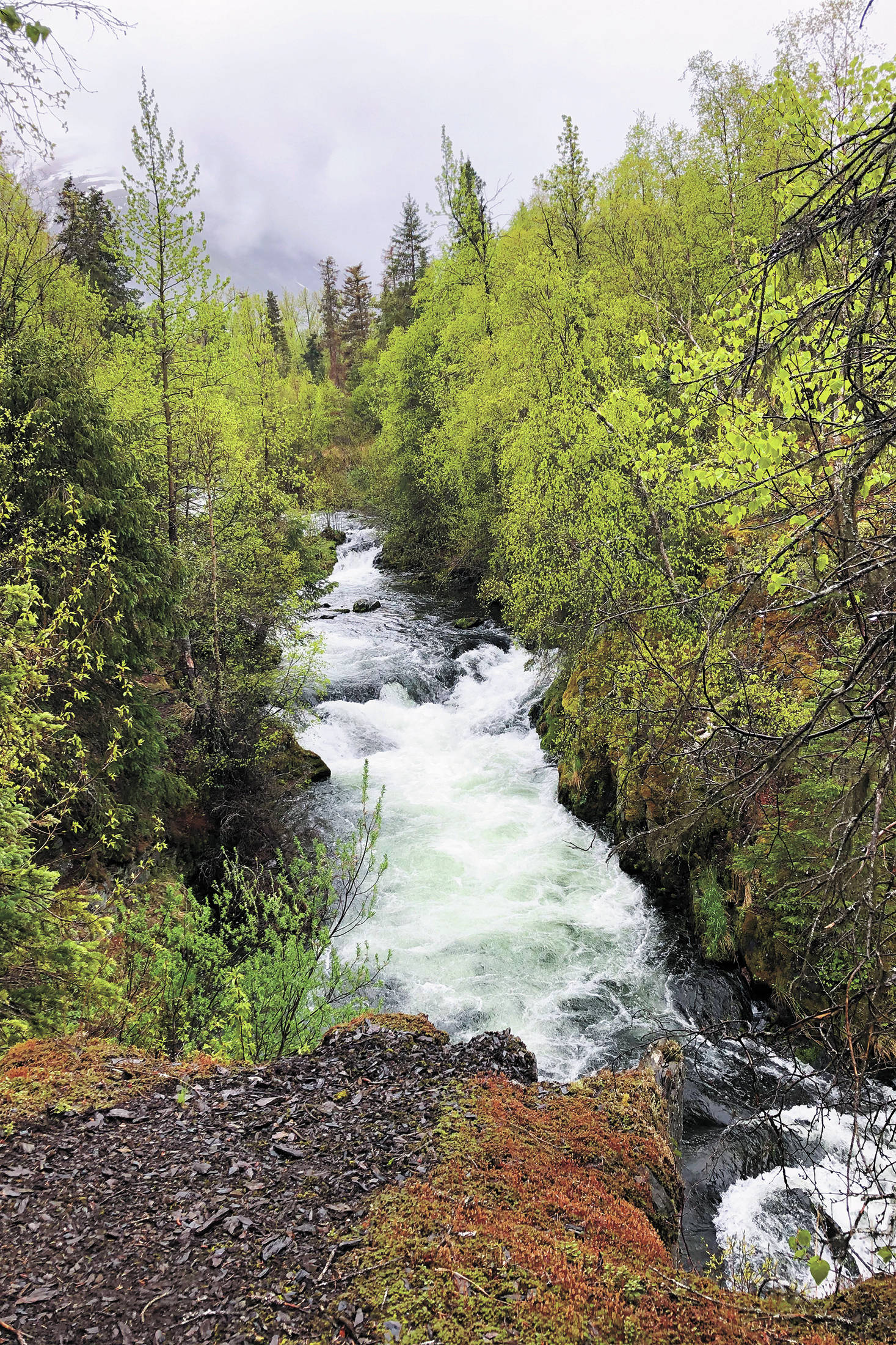 The Russian River Falls flow through the trees on a rainy, overcast Sunday, May 24, 2020 in Cooper Landing, Alaska. (Photo by Megan Pacer/Homer News)