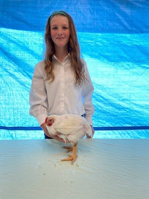Mandy Miotke with the Homer 4-H Alls shows off her chicken that will be sold at the 2020 Kenai Peninsula 4-H Junior Market Livestock Auction in this undated photo. (Photo courtesy Cassy Rankin)