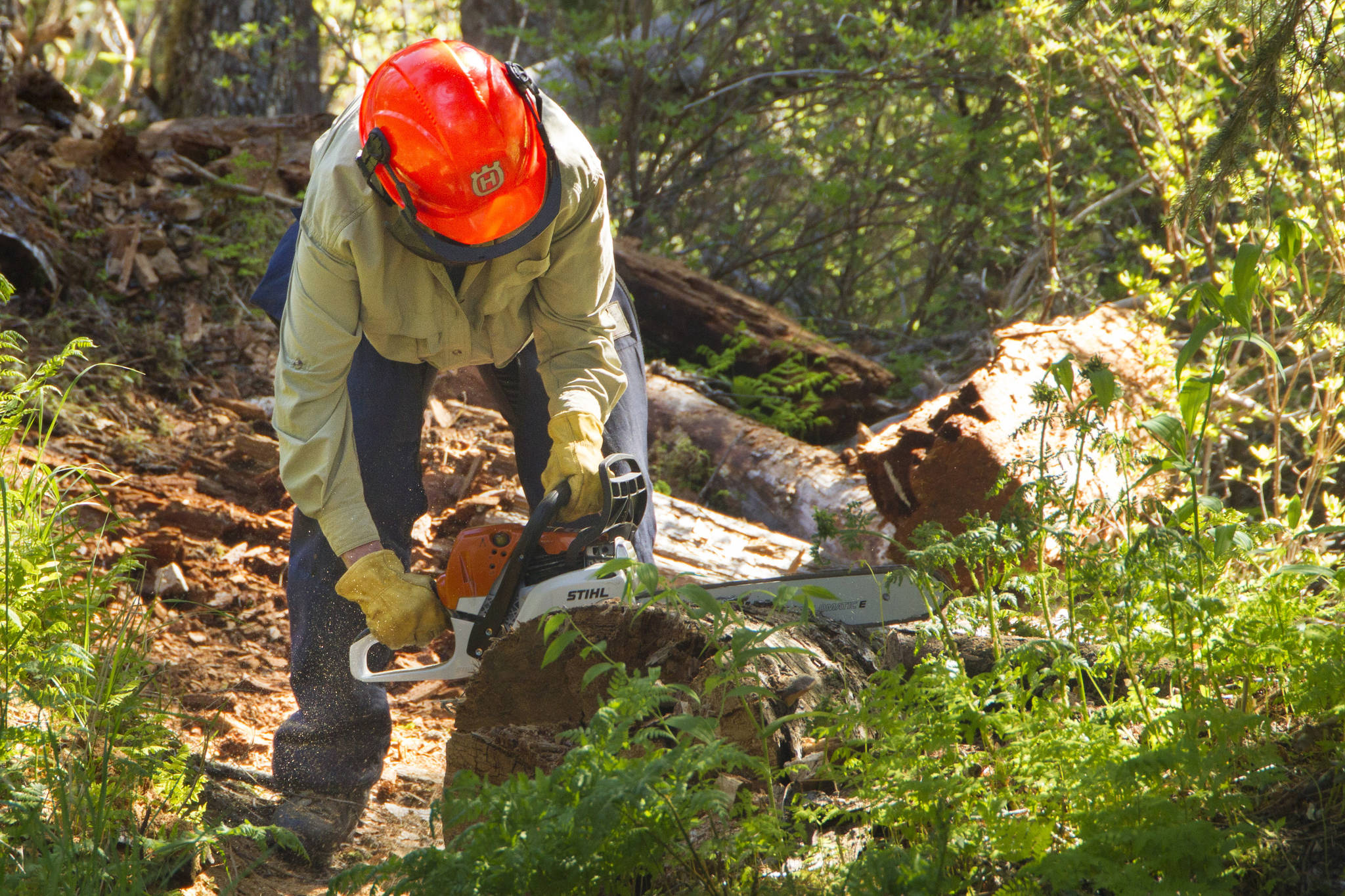 Kris Holderied cuts up a fallen log on the South Eldred Trail during National Trails Day. (Photo by Sarah Knapp/Homer News)