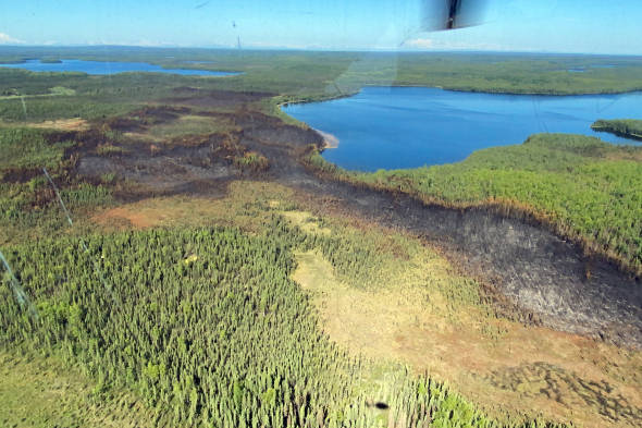 An aerial photo of the 102-acre Loon Lake Fire footprint taken at approximately 11:30 a.m. Tuesday, June 15, 2021. Swan Lake is in the background to the right. (Kale Casey/Alaska DNR-Division of Forestry)